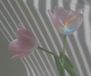 flowers, pink, and rainbow image