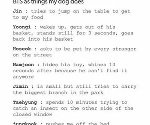 dogs, funny, and kpop image