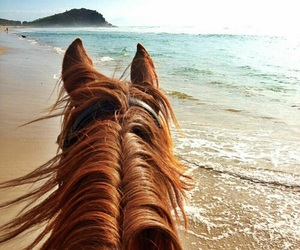 horse, beach, and ocean image