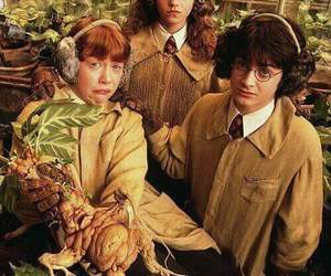 chamber of secrets, harry potter, and ron image