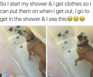 dog, funny, and shower image