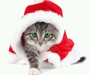 chat, pere noel, and noël image