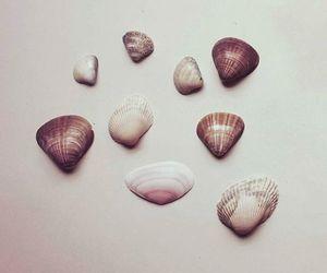 beach, seashell, and mermaid image