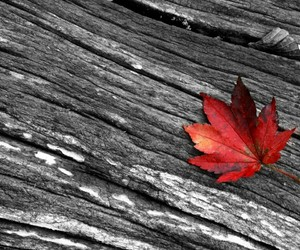 red, leaves, and sheet image