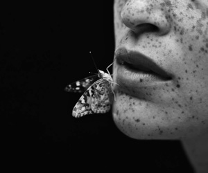 black and white, butterfly, and freckles image