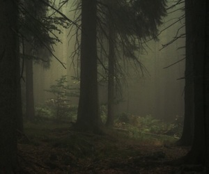 dark, forest, and cold image