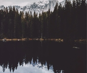 fog, forest, and reflection image