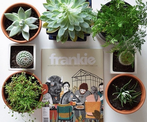 plants, green, and frankie image