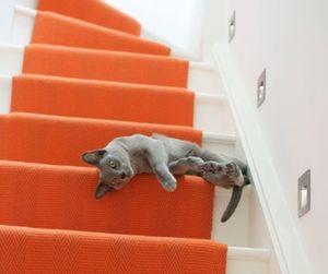 cat, gray, and orange image