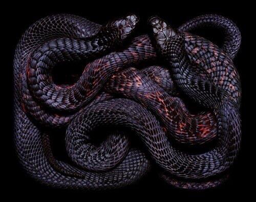snake and black image