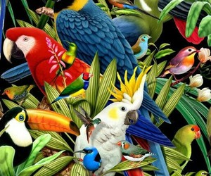 bird, background, and parrot image