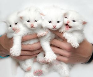 cat, kitten, and adorable image
