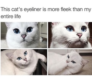 cat, eyeliner, and funny image