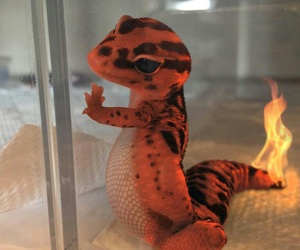 baby, fire, and charmander image