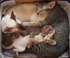 cat and family image