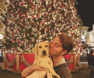 dogs, puppies, and shane dawson image