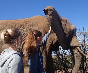 Dream, elephant, and south africa image