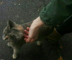 cat, green, and hand image