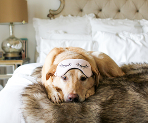 dog, animal, and bed image