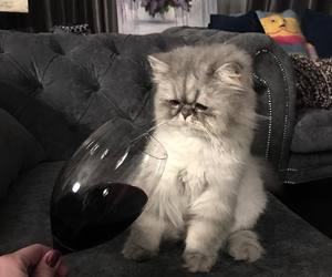 cat and wine image