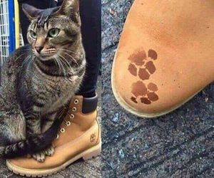 cat, animal, and boots image