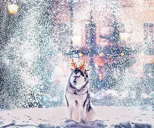 winter, christmas, and dog image