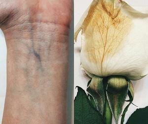 hand, عروق, and rose image