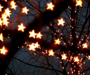 stars, light, and tree image