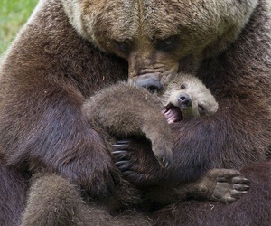 bear, animals, and baby image