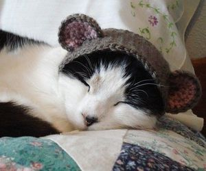 adorable, cat, and hat image