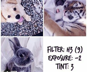 filters image