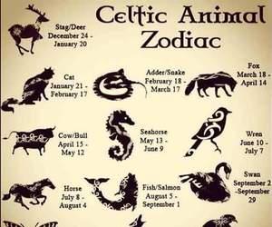 celtic, zodiac, and animal image