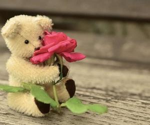 bear, cute, and rose image