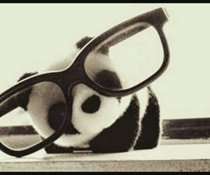 panda, cute, and glasses image