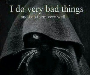 quotes, cat, and bad image