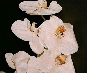 flower and orchid image