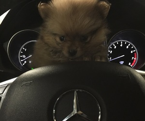 mercedes bear image