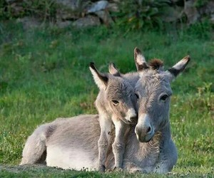 cute animals, donkey, and baby animals image