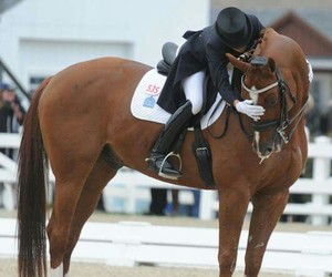 beauty, love, and dressage image