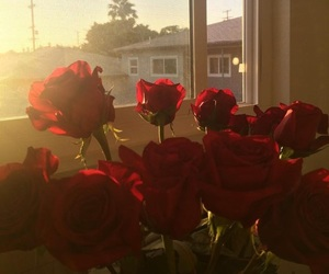 flower, rose, and sun image