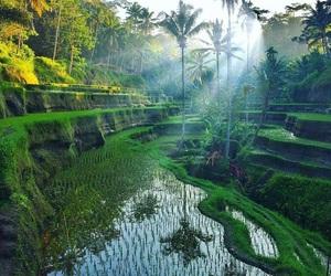 bali and nature image