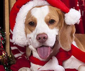 animal, animals, and christmas image