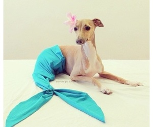 dog, funny, and mermaid image