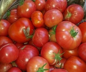 garden, domates, and kırmızı image