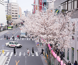 japan, sakura, and city image