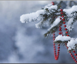 christmas tree, winter frost, and red ornament image