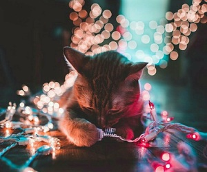 Animales, cat, and christmas image