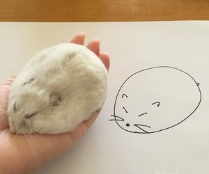 animals, drawing, and hamster image