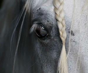 horse, blue, and eye image