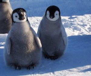 animal and penguins image